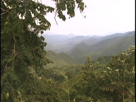 A jungle lies on the Thailand-Burma border Stock Video Footage