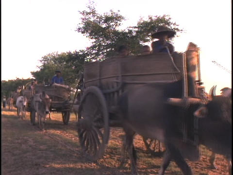 Oxen pull carts down a dirt road Footage