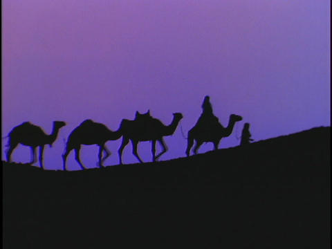 A caravan of camels silhouette against a purple sky Stock Video Footage