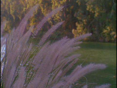The Jordan River flows near some purple reeds Stock Video Footage