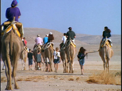 Tourists ride camels through a desert in Israel Live Action