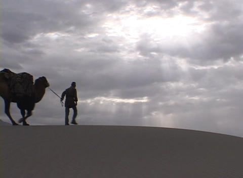 A man leads a camel train across the desert Stock Video Footage