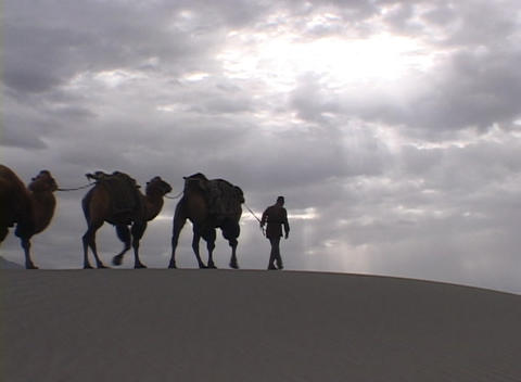 A man leads a camel train across the desert Footage
