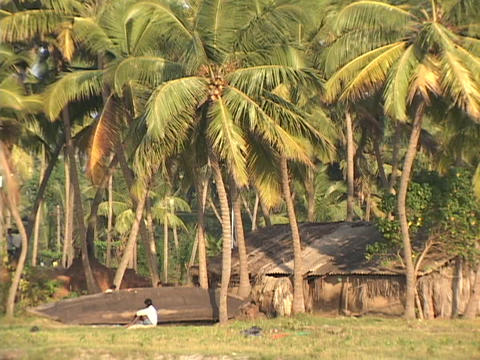 Palm tress surround a fisherman and his small canoe Stock Video Footage