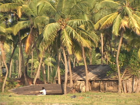 Palm tress surround a fisherman and his small canoe Footage