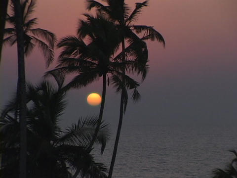 A slight breeze blows through palm trees Stock Video Footage