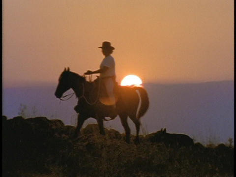 A horseback rider rides a horse during golden hour Stock Video Footage