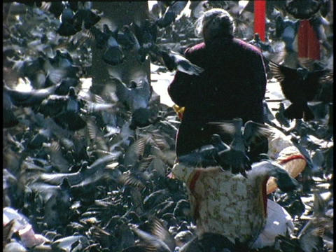 A woman feeds pigeons amidst a torrent of birds Stock Video Footage