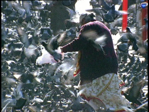 A woman feeds pigeons amidst a torrent of birds Footage