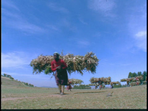 African women carry bushels of sticks and crops to market Stock Video Footage