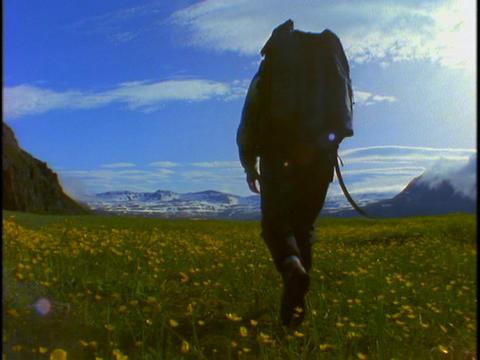 A backpacker walks across open fields of flowers Stock Video Footage