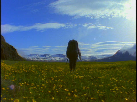 A backpacker walks across open fields of flowers Footage