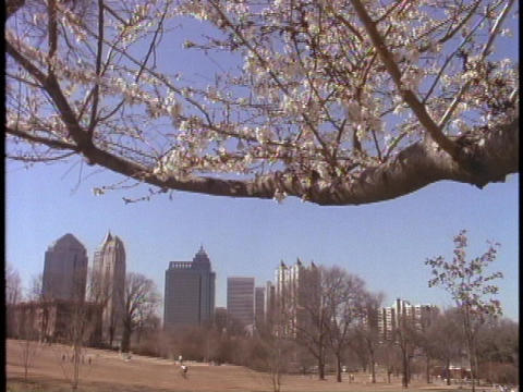 Cherry trees bloom at an Atlanta park Stock Video Footage