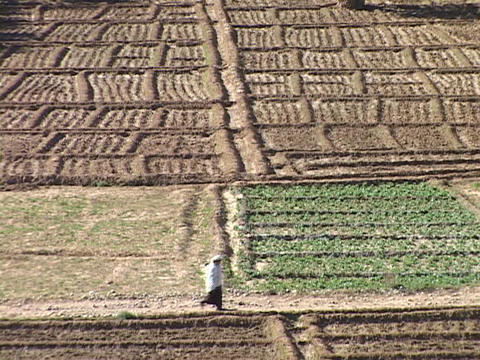 An Arabian woman walks through plowed fields Stock Video Footage