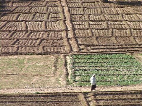 An Arabian woman walks through plowed fields Stock Video Footage