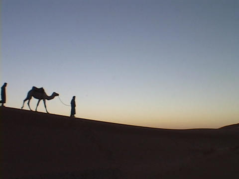 A camel train travels across a desert Stock Video Footage