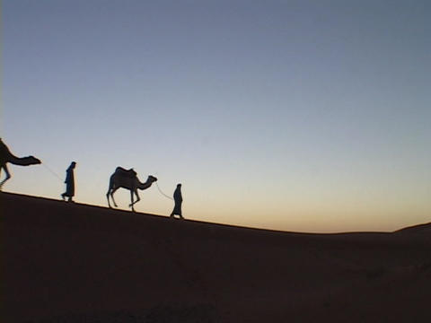 A camel train travels across a desert Footage