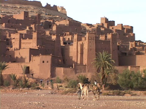 Camels walk toward an small town in Morocco Footage
