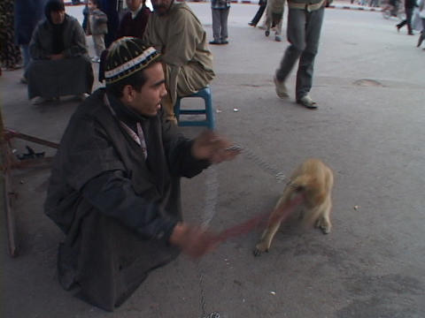 A monkey performs tricks for its master in Marrakesh Morocco Stock Video Footage