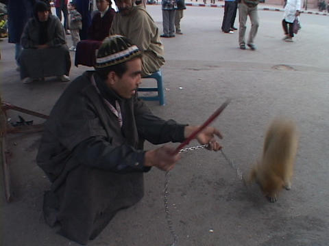 A monkey performs tricks for its master in Marrakesh Morocco Footage