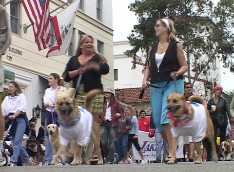 Dog owners walk with their pets during a parade Stock Video Footage