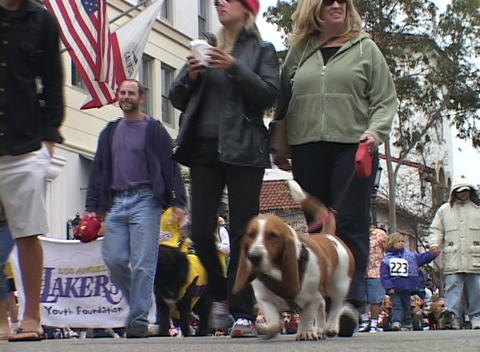 Dog owners walk with their pets during a parade Footage