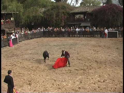 A bullfighter taunts a bull with a red cape Stock Video Footage