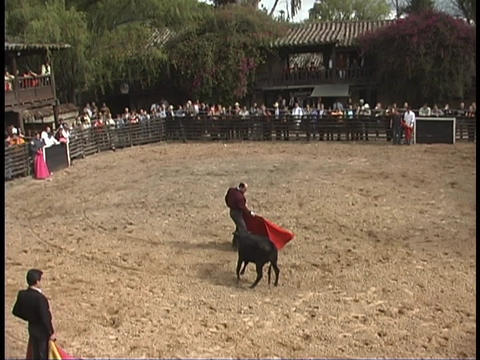 A bullfighter taunts a bull with a red cape Live Action