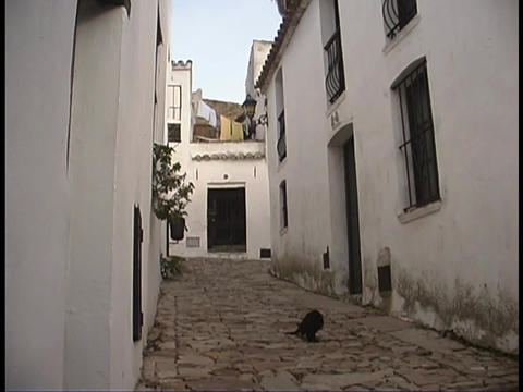 A cat wanders through the streets of a small village Footage