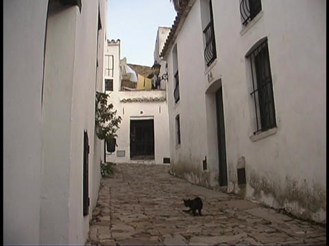 A cat wanders through the streets of a small village Stock Video Footage