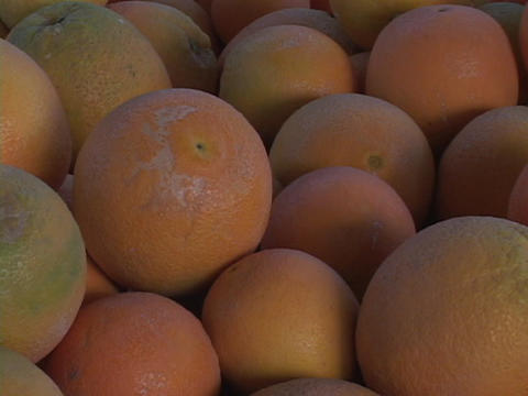 Fresh oranges sit is a display Stock Video Footage