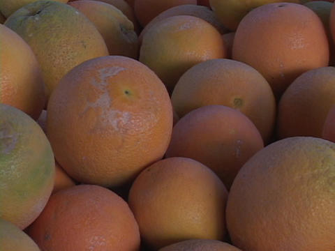 Fresh oranges sit is a display Stock Video Footage
