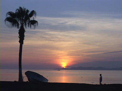 A silhouetted palm tree with boat tied to it rests on a... Stock Video Footage