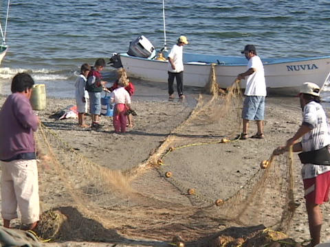 A groups of Mexican fishermen haul a net from a boat Stock Video Footage