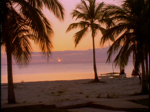 The palm trees on this beach bask in the glow of golden hour Stock Video Footage
