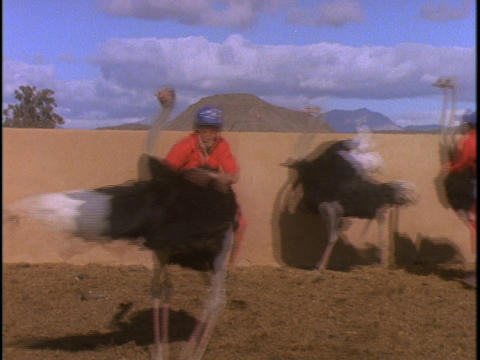 A man in an orange jumpsuit rides an ostrich around in... Stock Video Footage