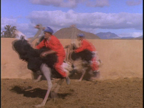 A man in an orange jumpsuit rides an ostrich around in... Stock Video Footage