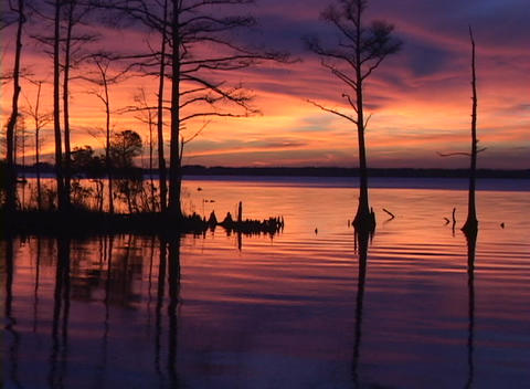 Trees rise out of the water during golden hour Stock Video Footage