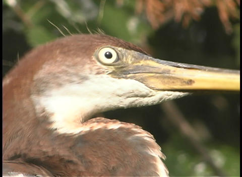 A brown and white bird with a long beak moves its head... Stock Video Footage