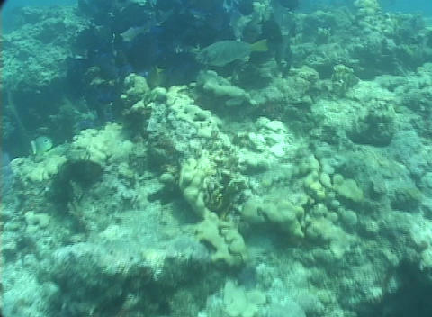 Tropical fish swim around a coral reef near the ocean floor Stock Video Footage