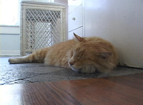 A orange and white striped cat sleeps on a tile floor Stock Video Footage