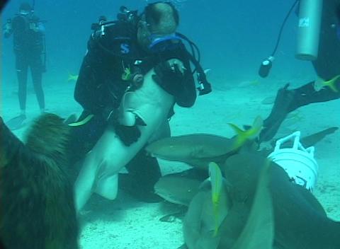 A scuba diver hugs and strokes a nurse shark's belly Footage