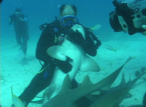 A scuba diver hugs and strokes a nurse shark's belly Stock Video Footage