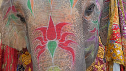 Face of elephant painted for festival,Jaipur,Gangaur,India Footage