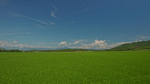 Camera Moves along Rice Fields against Blue Sky in Vietnam Footage
