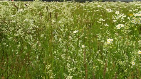 Field flowers background Footage