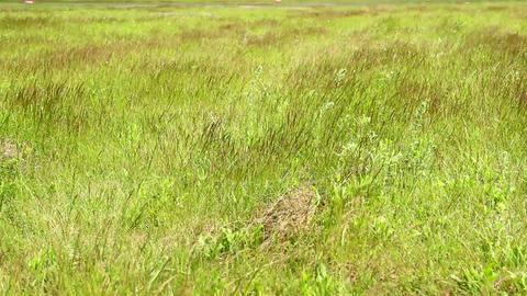 Wind on green grass on field Footage