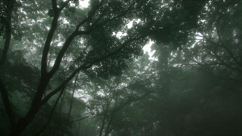 misty forest, Rock garden Ootsuki in Japan 大月 ロックガーデン 渓流  Footage