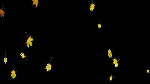 Autumn Leaves Overlay 03 CG動画