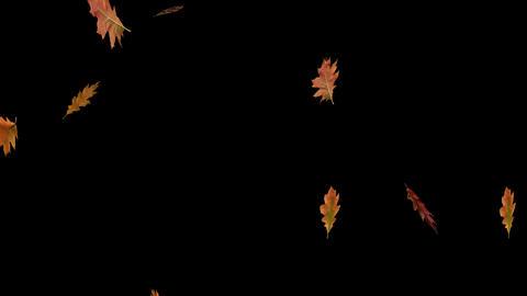 Autumn Leaves Overlay 04 GIF